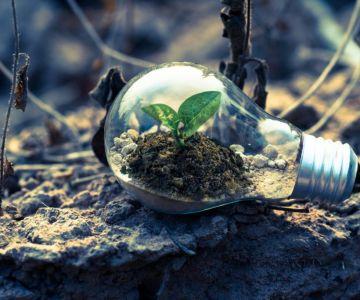 plant in bulb on soil