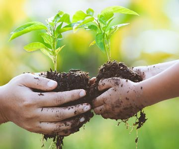 A two hands hold the plant with soil